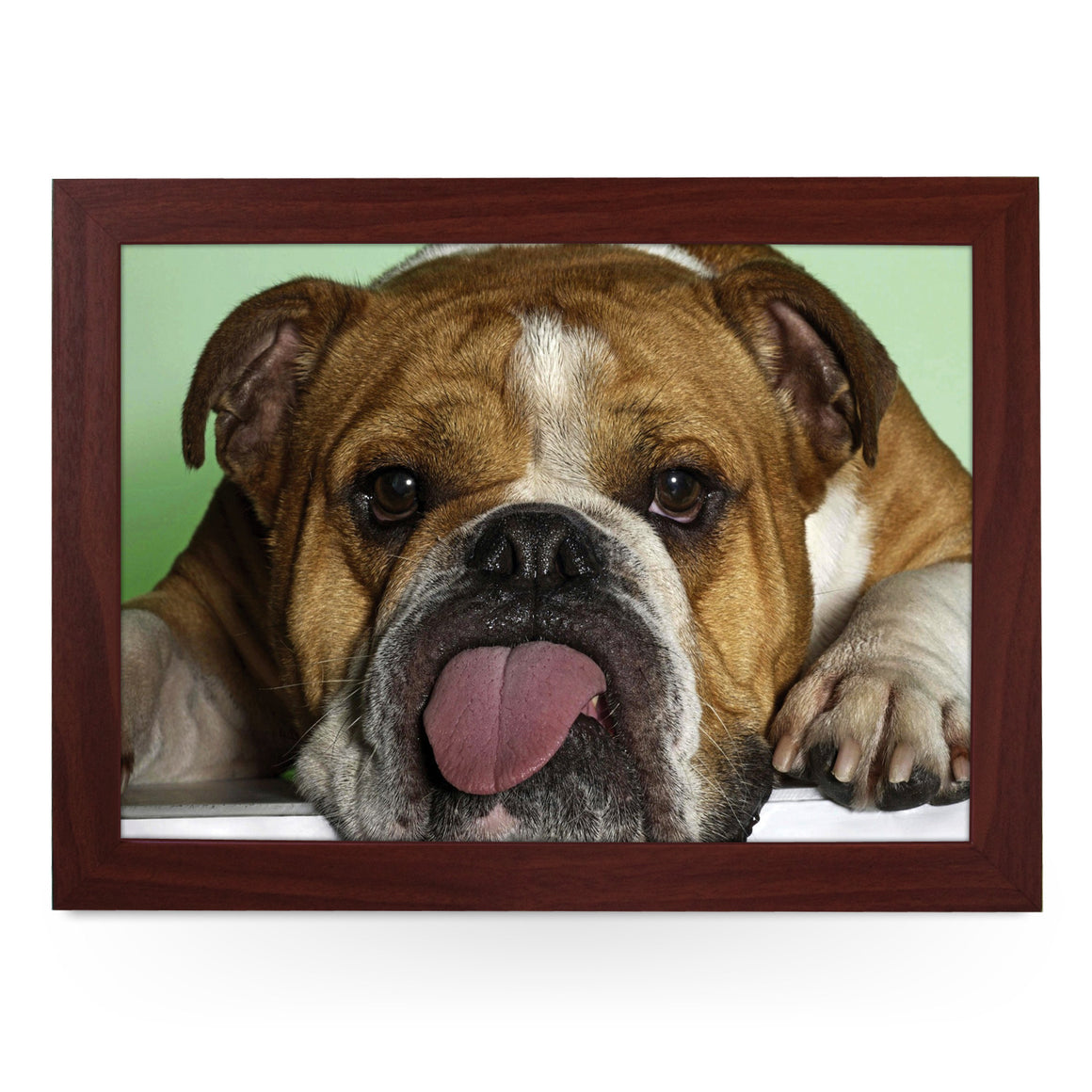 Bulldog Sticking Tongue Out Lap Tray - L0176