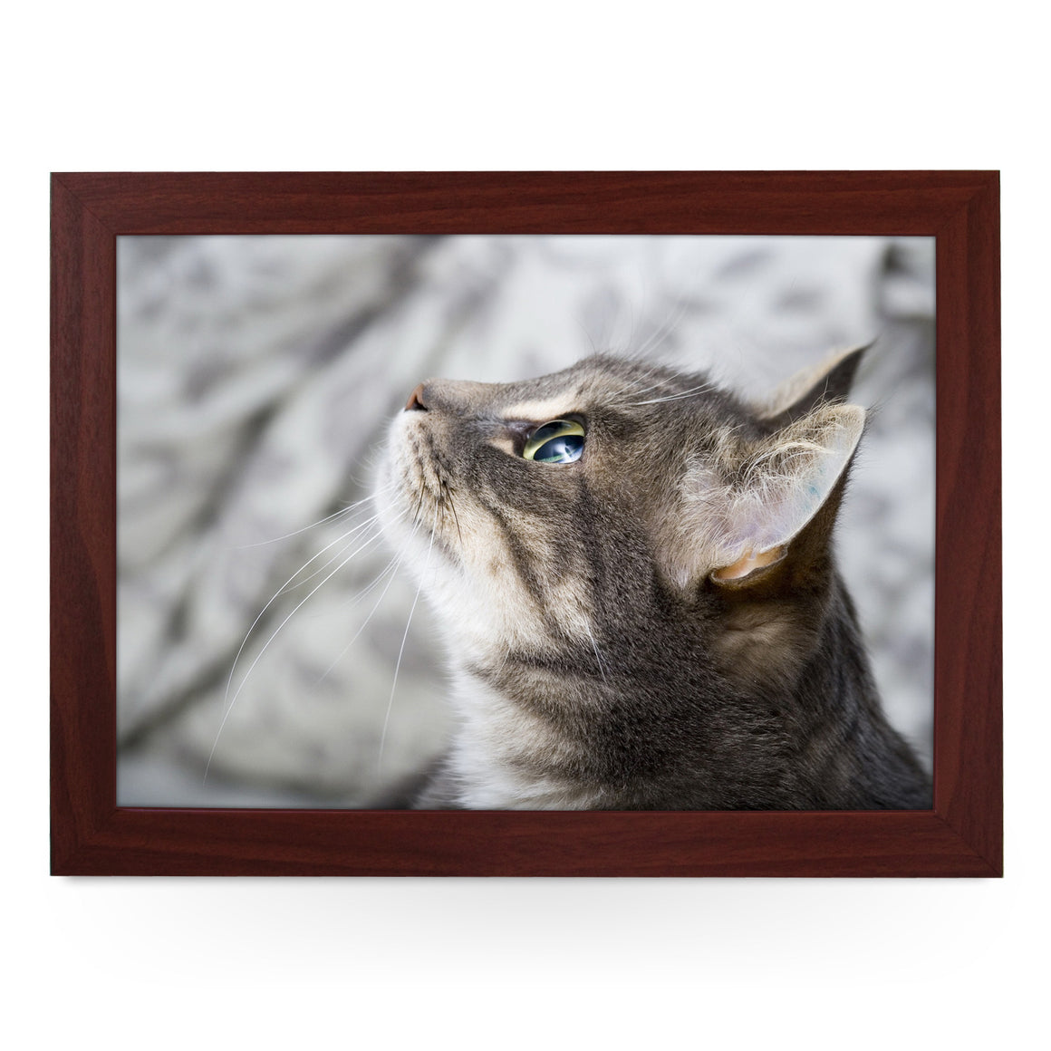 Grey Cat Looking Up  Lap Tray - L0177