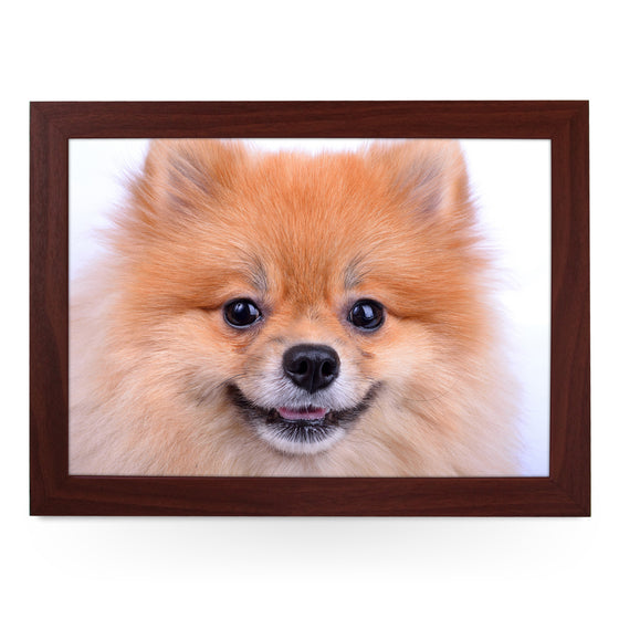 Pomeranian Dog Close Up Lap Tray - L0200