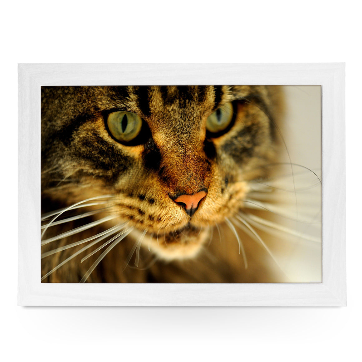 Tabby Cat Close Up Lap Tray - L0044