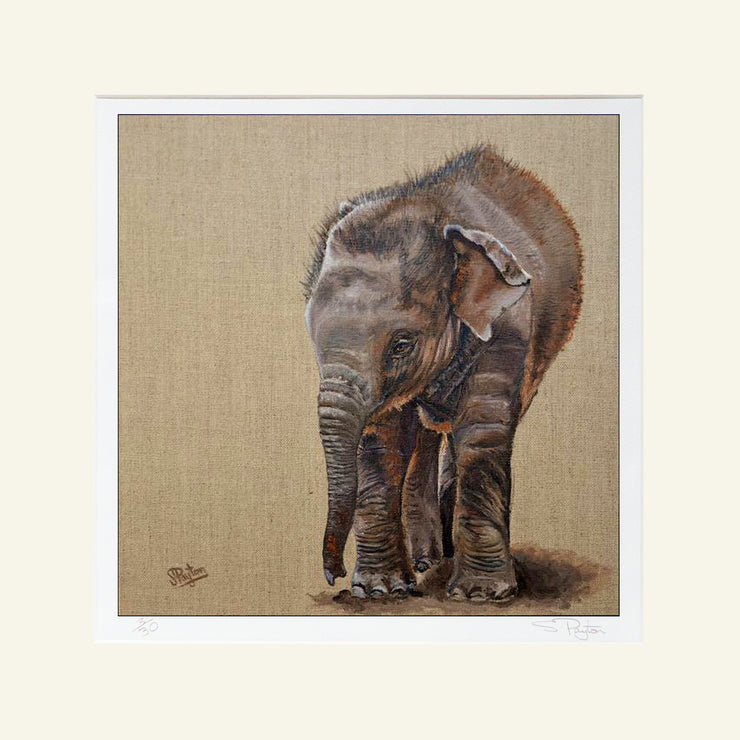 Baby Elephant Mounted Print by Sue Payton