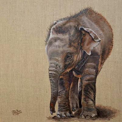 Baby Elephant by Sue Payton