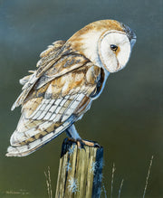 Always Watching Owl Original Painting by Ben Waddams