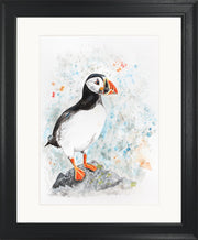 Perching Peter limited edition print by Lesley Palmer Framed Black