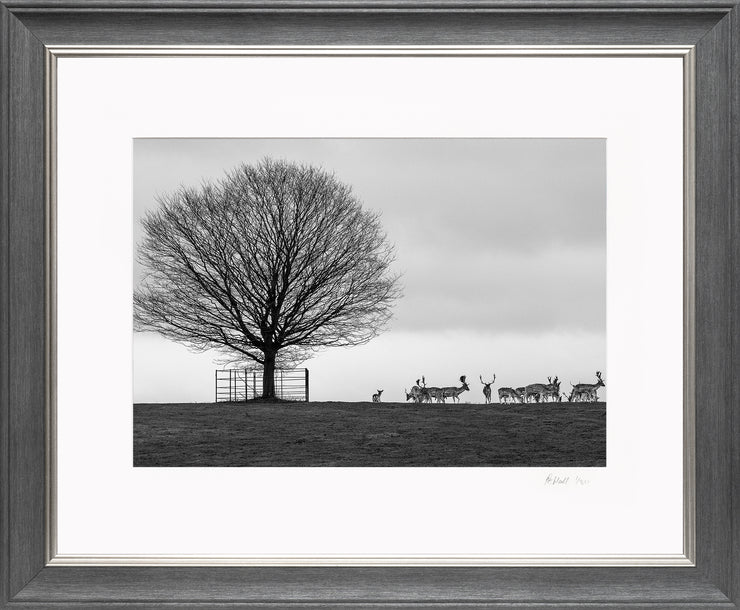 Stags on the Horizon Limited Edition Print by Rob Hall Grey and Silver Frame