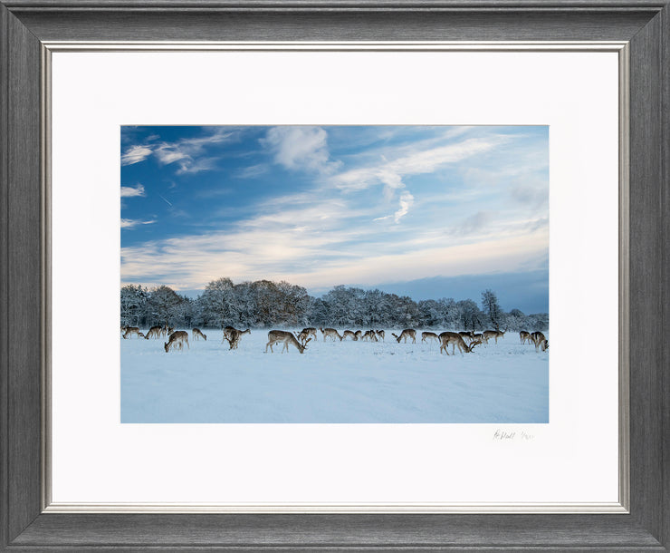 A Winter Deer Herd Limited Edition Print by Rob Hall Grey and Silver Frame