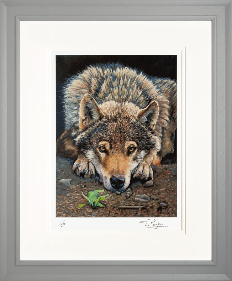 Patience Limited Edition Print by Sue Payton