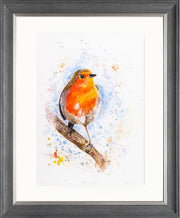 Rocky Robin Limited Edition Print by Lesley Palmer Framed Grey Silver