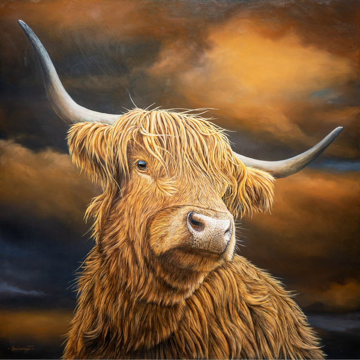 Highland Cow box canvas print by Ben Waddams