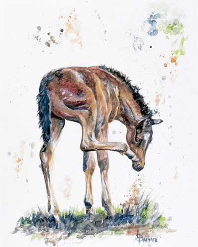 Itchy Nose Foal Limited Edition Print by Lesley Palmer