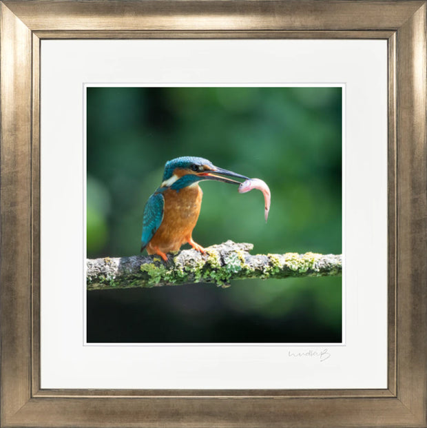 Kingfisher print by Lindsey Bucknor