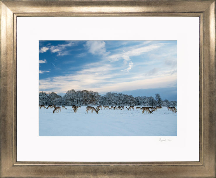 A Winter Deer Herd Limited Edition Print by Rob Hall Bronze Frame