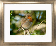 Simply a Robin Limited Edition Print by Rob Hall Bronze Frame