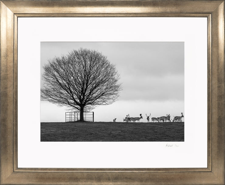 Stags on the Horizon Limited Edition Print by Rob Hall Bronze Frame