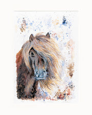 Shaggy Shetland Limited Edition Print by Lesley Palmer Mounted