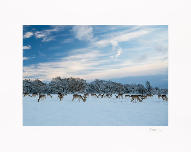 A Winter Deer Herd Limited Edition Print by Rob Hall Mounted