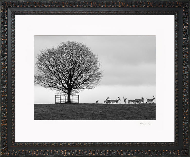 Stags on the Horizon Limited Edition Print by Rob Hall Ornate Black Frame