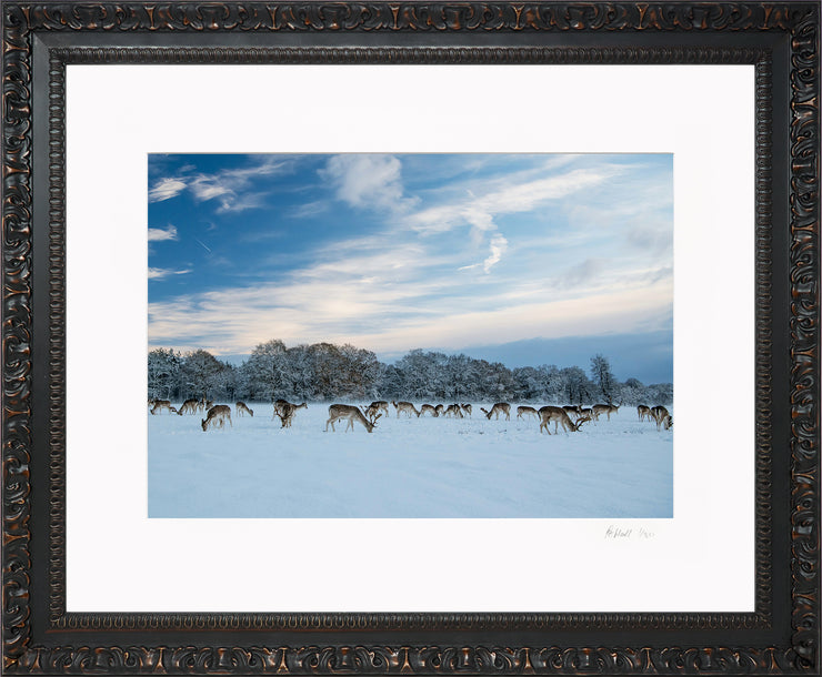 A Winter Deer Herd Limited Edition Print by Rob Hall Ornate Black Frame