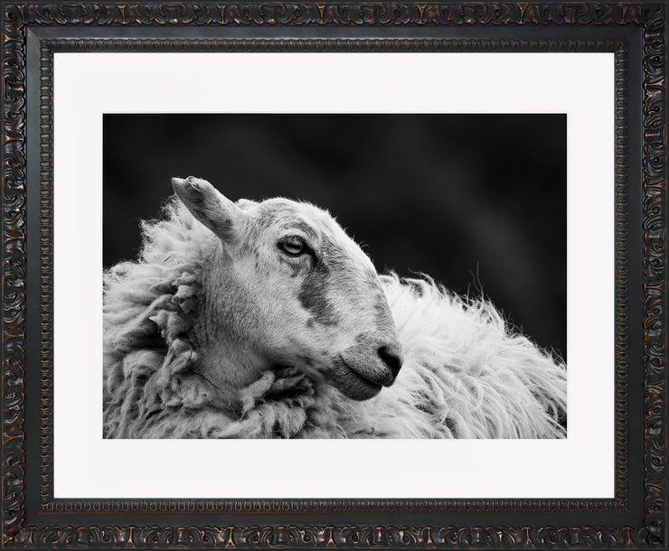 Sheep 2 Limited Edition Print by Neil Murray Ornate Black Frame