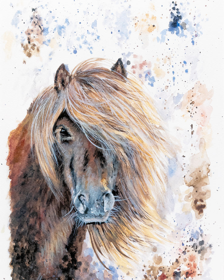 Shaggy Shetland Limited Edition Print by Lesley Palmer