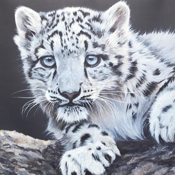 Snow Leopard Cub box canvas print by Sue Payton