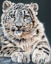 Snow Leopard Cub Limited Edition Print by Sue Payton