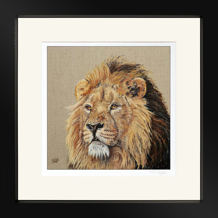 Lion Print by Sue Payton Framed Black
