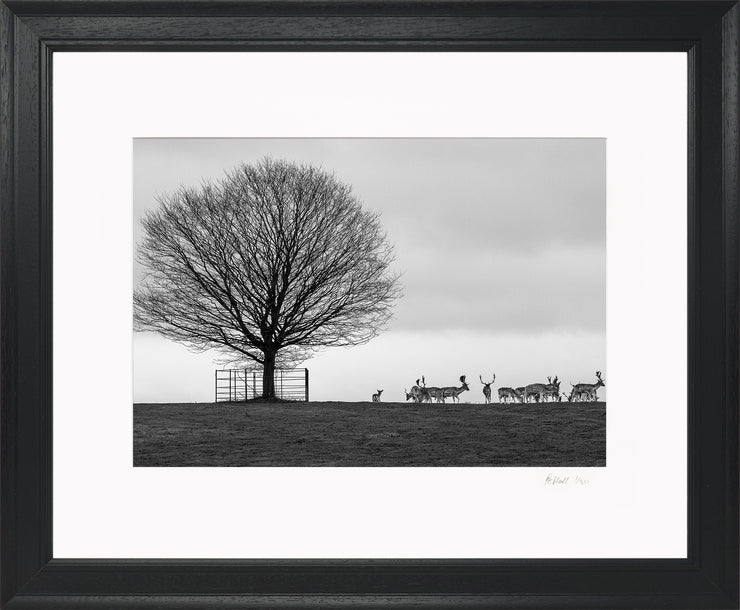 Stags on the Horizon Limited Edition Print by Rob Hall Black Frame