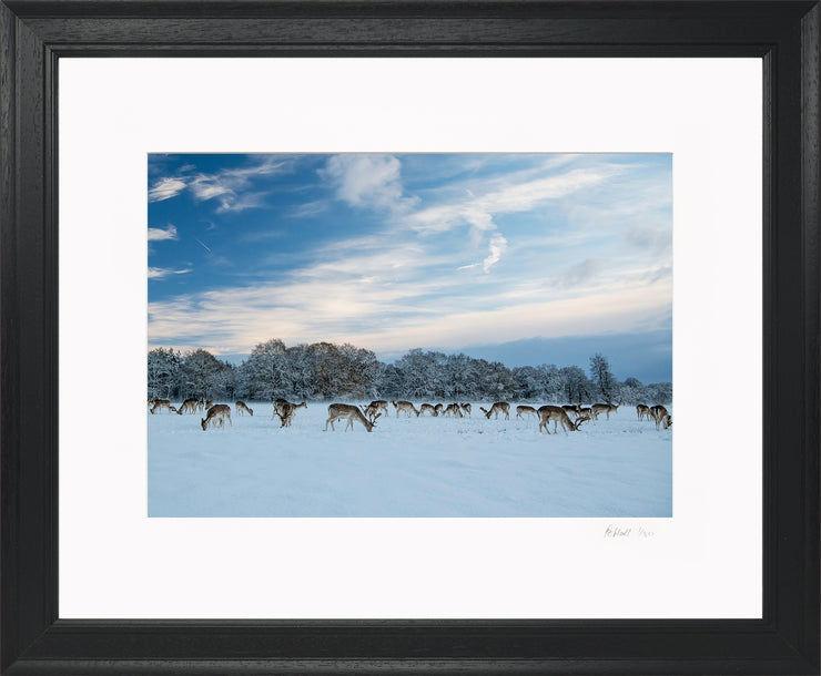 A Winter Deer Herd Limited Edition Print by Rob Hall Black Frame
