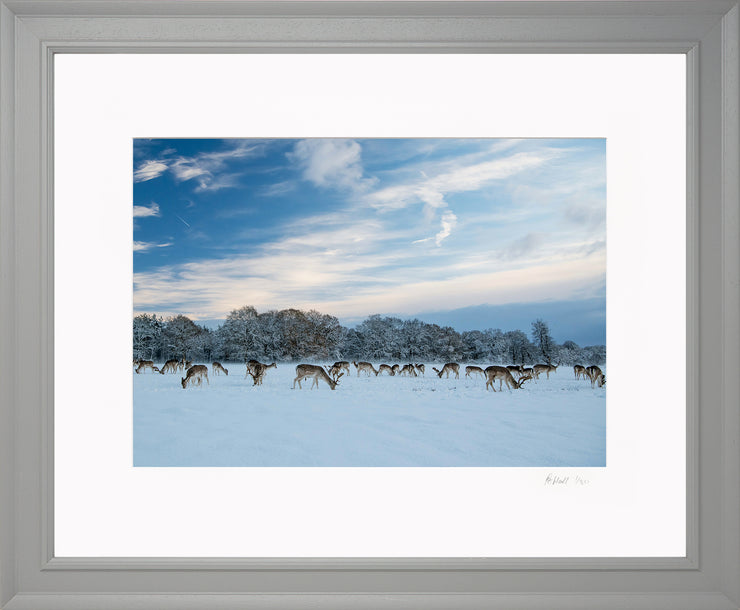A Winter Deer Herd Limited Edition Print by Rob Hall Grey Frame