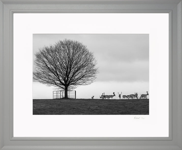 Stags on the Horizon Limited Edition Print by Rob Hall Grey Frame