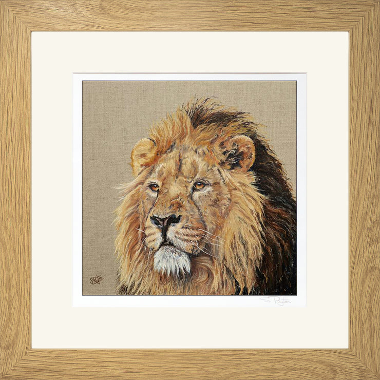Lion Print by Sue Payton Framed Oak