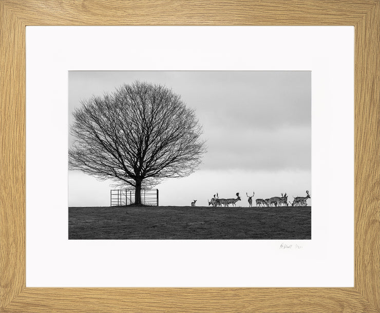 Stags on the Horizon Limited Edition Print by Rob Hall Oak Frame
