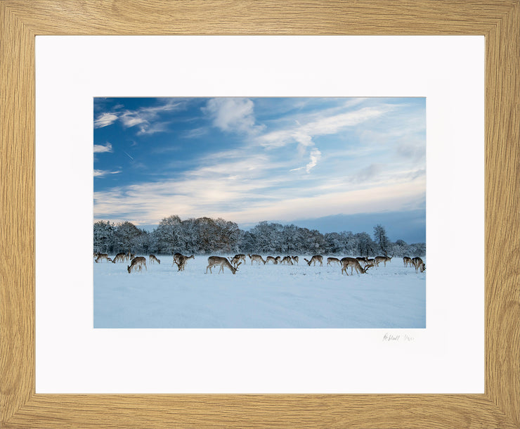 A Winter Deer Herd Limited Edition Print by Rob Hall Oak Frame