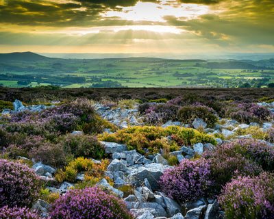 Stiperstones Sunset Print by Lindsey Bucknor