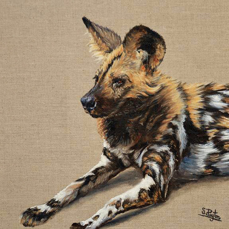 Wild Dog limited edition print by Sue Payton