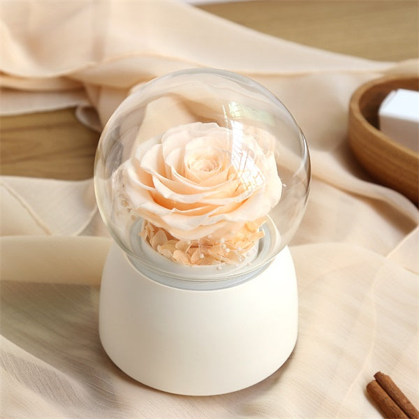 Preserved Rose in Glass Dome Rotating Music Box