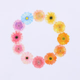 Bande DIY Masking Tape Flowers Stickers - Gerbera - Washi Tape - bunbougu.com.au