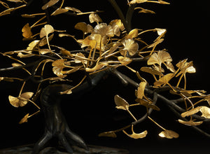 BONSAI GINKO BILOBA. Shop and Give Back to the Jane Goodall Institute. - [Epicurus Life]
