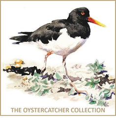 Oystercatcher Collection