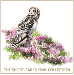 Short-Eared Owl Collection