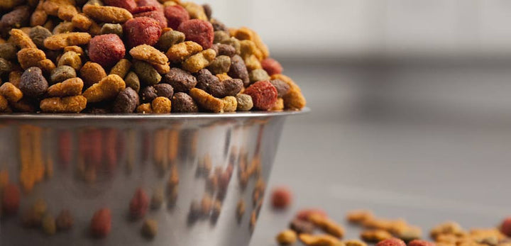 Top 4 Best Dog Food to Feed Your Bully.