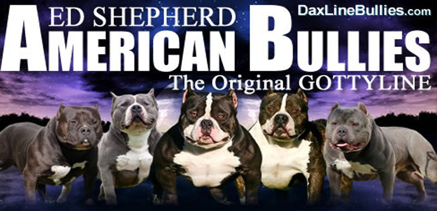 Ed Shepherds' Daxline Bullies – Muscle Bully Supplements