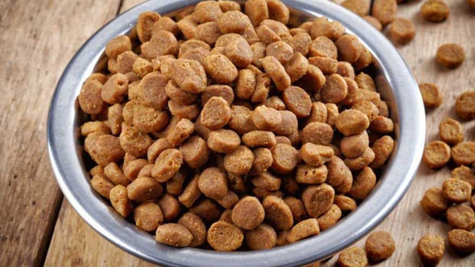The Top 3 High Calorie Dog Food You Should Consider.