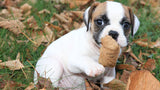 Top 3 Puppy Nutrients To Feed A Growing Puppy