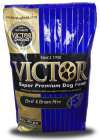 Top 4 Best Dog Food To Feed Your Bully Muscle Bully