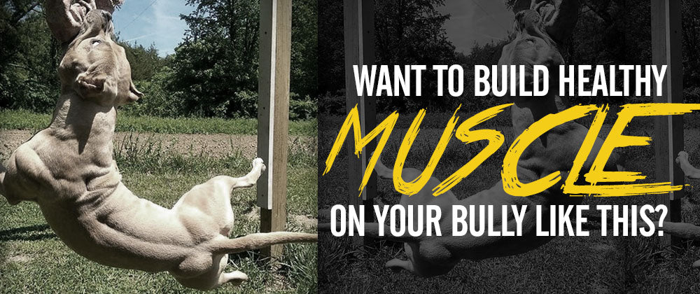 Want to build healthy natural muscle and mass on your pitbull or bully dog?