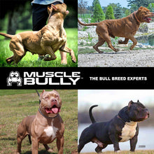 Load image into Gallery viewer, Vita Bully Vitamins for Bull Breeds, 34+ Key Nutrients and Vitamins, Supports Muscle Growth, Immune System and Overall Health.