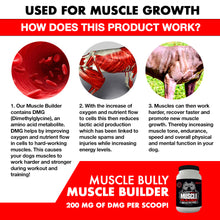 Load image into Gallery viewer, This is a chart of how our supplements helps build muscle on your bully using DMG.