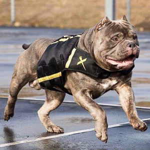 American bully weight vest for muscle